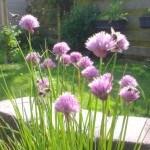 Hoe maak je een tuin hommel- en bijvriendelijk?