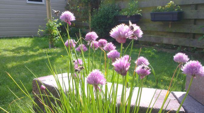 bijen-hommels-bijvriendelijke-tuin-header
