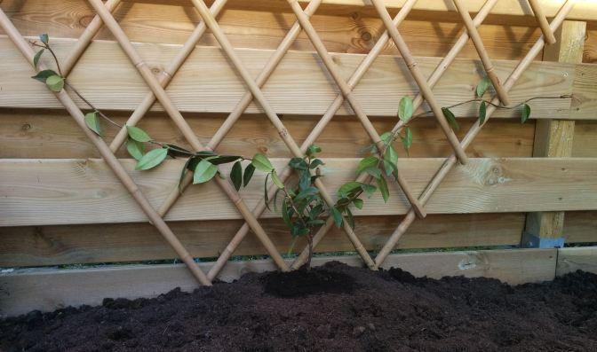 Klimrek Voor Planten.Hoe Maak Je Van Duurzaam Bamboe Een Klimrek Voor Een Klimplant