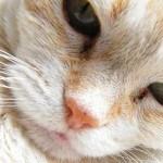 Pleidooi voor de oudere kat, de karakterbom onder de katten