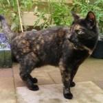 5 vriendelijke manieren om katten uit je tuin te houden