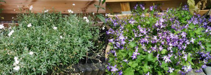 bodembedekkers-tegen-katten-in-de-tuin
