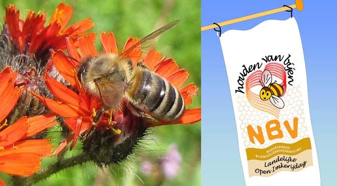 11 & 12 juli: beleef het bijenhouden op de Landelijke Open Imkerijdag