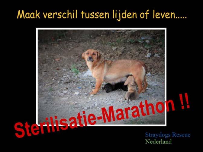 sterilisatie-marathon