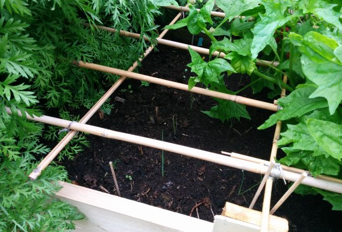Wat te doen tegen kattenpis in de tuin