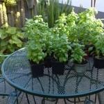 Mijn favoriete tuintips: de tips van Romke van de Kaa