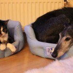Tips: 13 x eigenwijs blij omgaan met dieren en huisdieren