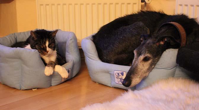 Pleeggezin voor honden en katten: de eerste 24 uur