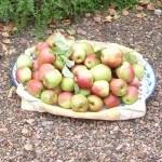 Fruit in de moestuin: leuk en niet erg moeilijk