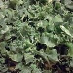 Boerenkool recepten: koken met seizoensgroenten & eigen oogst