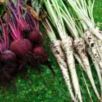 Mijn 6 tips voor het kweken van groente in een kleine tuin