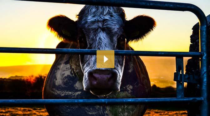 docu-cowspiracy