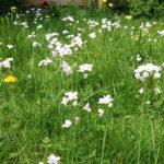 Stappenplan: verander je gazon in een bloemenweide met slim grasmaaien