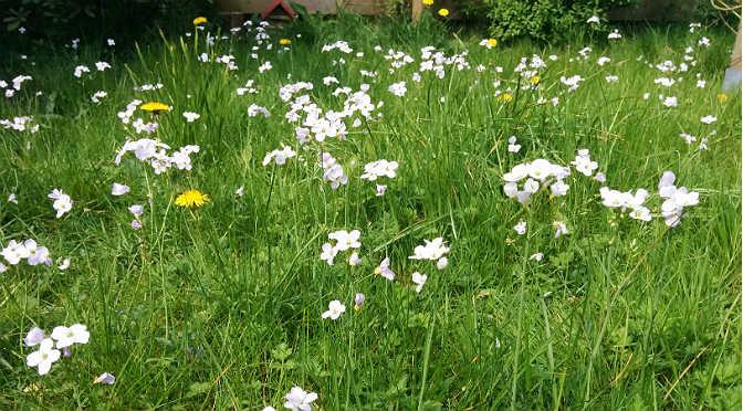 gazon-bloemenweide