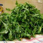 Rucola recepten: koken met seizoensgroenten en eigen oogst