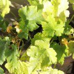 Courgette recepten: koken met seizoensgroenten en eigen oogst