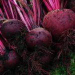 Rode biet recepten: koken met seizoensgroenten en eigen oogst
