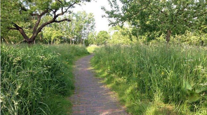 appelhof-hoog-gras-zaden
