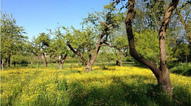appelhof-zeis-bloemen-bloemenweide
