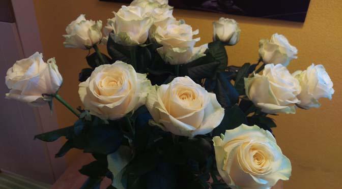 CERTI: eerlijke bloemen bloeien het mooist!