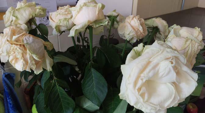 certi-bloemen-6