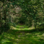 Wat is natuurbegraven en waarom kiezen mensen een natuurbegrafenis?
