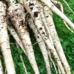 Pastinaak recepten: koken met seizoensgroenten en eigen oogst