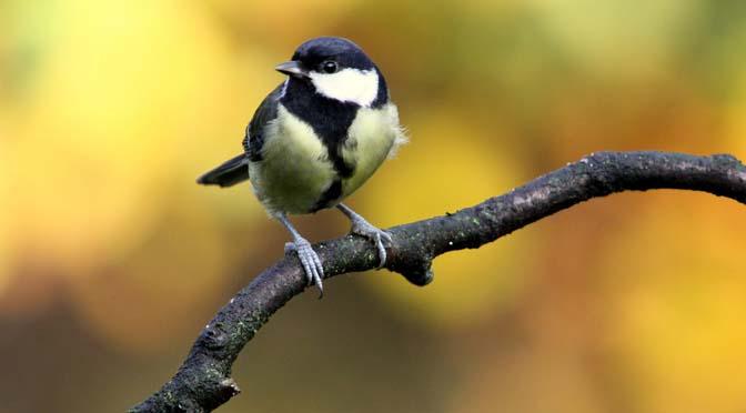 Tuinvogeltelling op 28 & 29 januari: tel de vogels in jouw tuin!