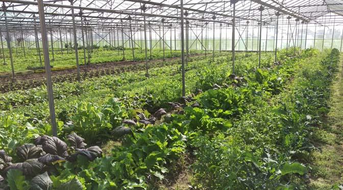 Ga je regio in en bezoek die boeren en tuinen en markten!