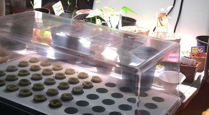 Uv Licht Kopen : Verse groenten het hele jaar rond met uv licht en hydrocultuur ikea