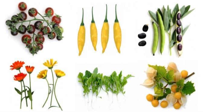 Zaden van eetbare planten bestellen bij webshop 'denieuwetuin', een review