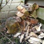 Het ultieme insectenhotel voor een gewone tuin; een stappenplan