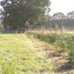 Permacultuur ontwerp windsingel voor beschutting, insecten en voedsel