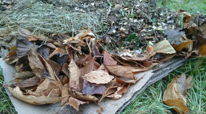 Zo geef je bomen en struiken een ideale voedingsbodem met sheetmulchen