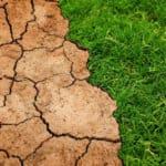 Meer droge en hete zomers: zo maak je je tuin geschikt voor de gevolgen van klimaatafbraak