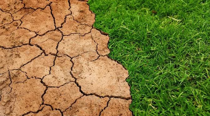 Droge, hete zomers: maak je tuin klaar voor de gevolgen van klimaatafbraak