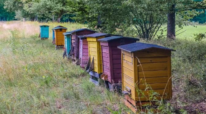 Is het slim om bijenkasten te plaatsen voor de biodiversiteit?