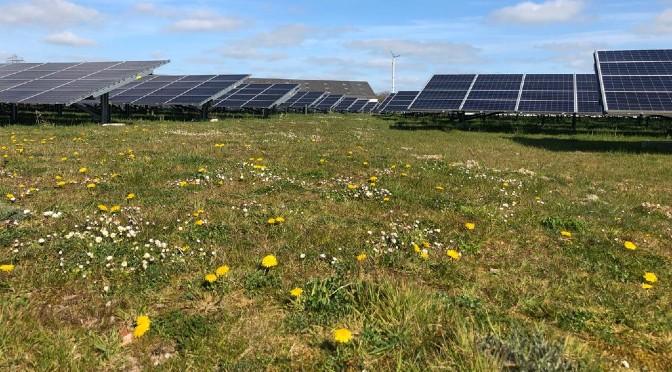 Mythes rond de ecologie van zonneparken en tips voor meer biodiversiteit in een zonnepark