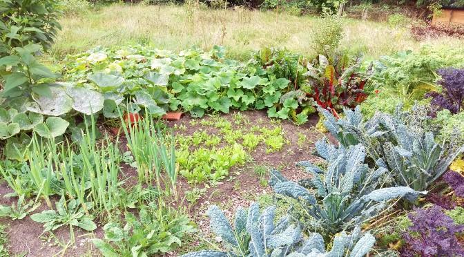 Eetbare tuin supertip: 1) Eet 2) Bewaar 3) Verwerk (tenzij)