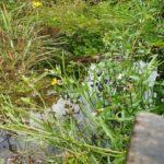 Regenwater behouden in de tuin met een Wadi. Hoe doe je dat? Stappenplan en tips voor een wadi