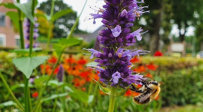 Planten voor bijen in de nazomer en herfst
